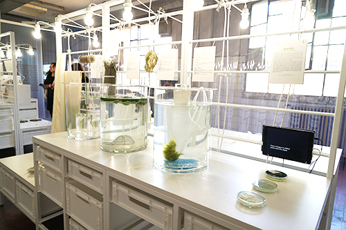 藻類を素材とするプロジェクト