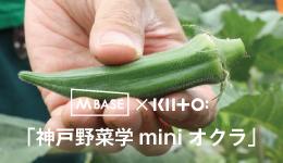 M BASE×KIITO「神戸野菜学miniオクラ」