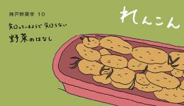 神戸野菜学vol.10 れんこん