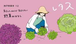 神戸野菜学vol.12 レタス