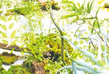 セルフ・ビルド・ワークショップ 生意気とつくるKIITOの庭~なかにわなかまvol.2~